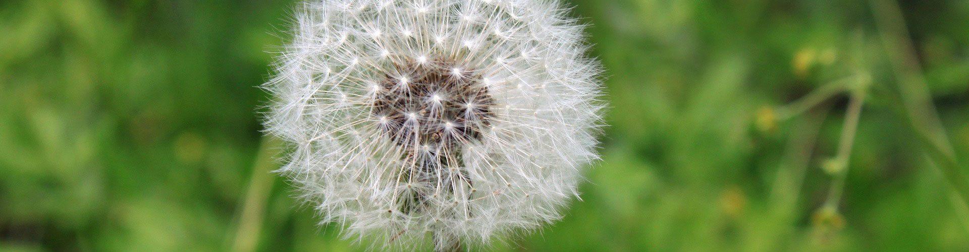 Are You Prepared for Allergy Season?
