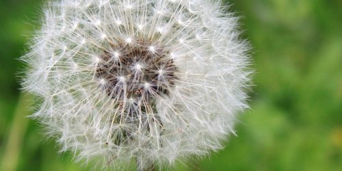 Are You Prepared for Allergy Season?